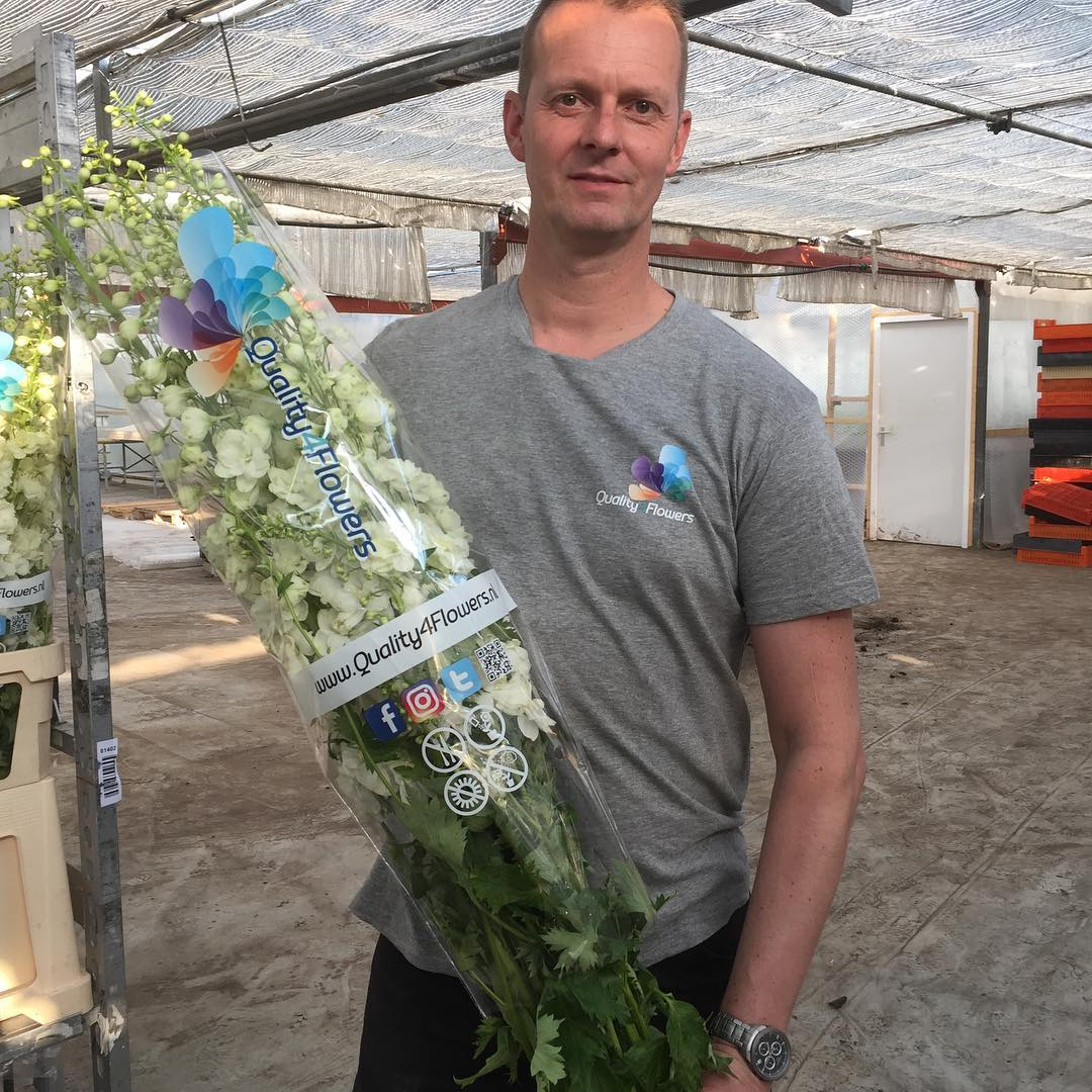 Here we come…Tomorrow the first #delphiniums are at the #auction #floraholland…